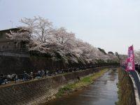 桜まつり花見①